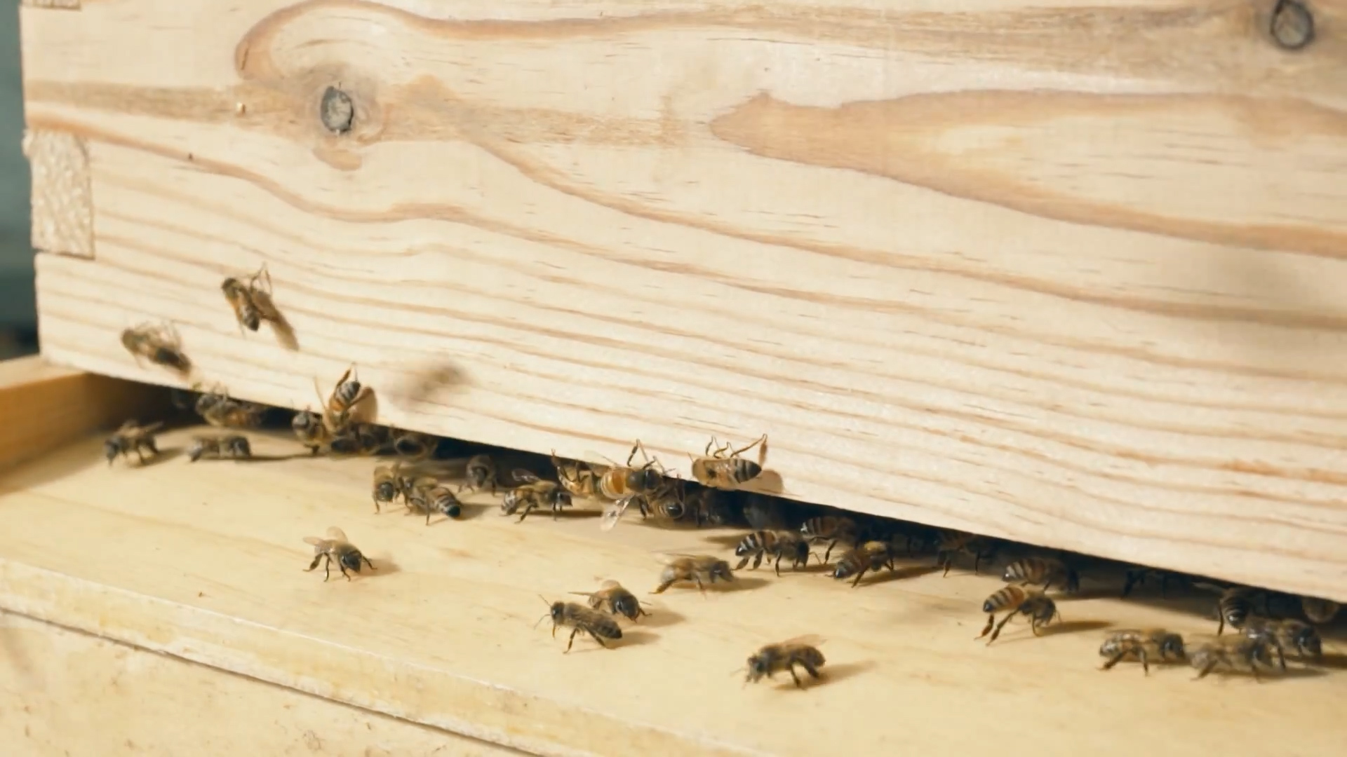 Understanding bee stings
