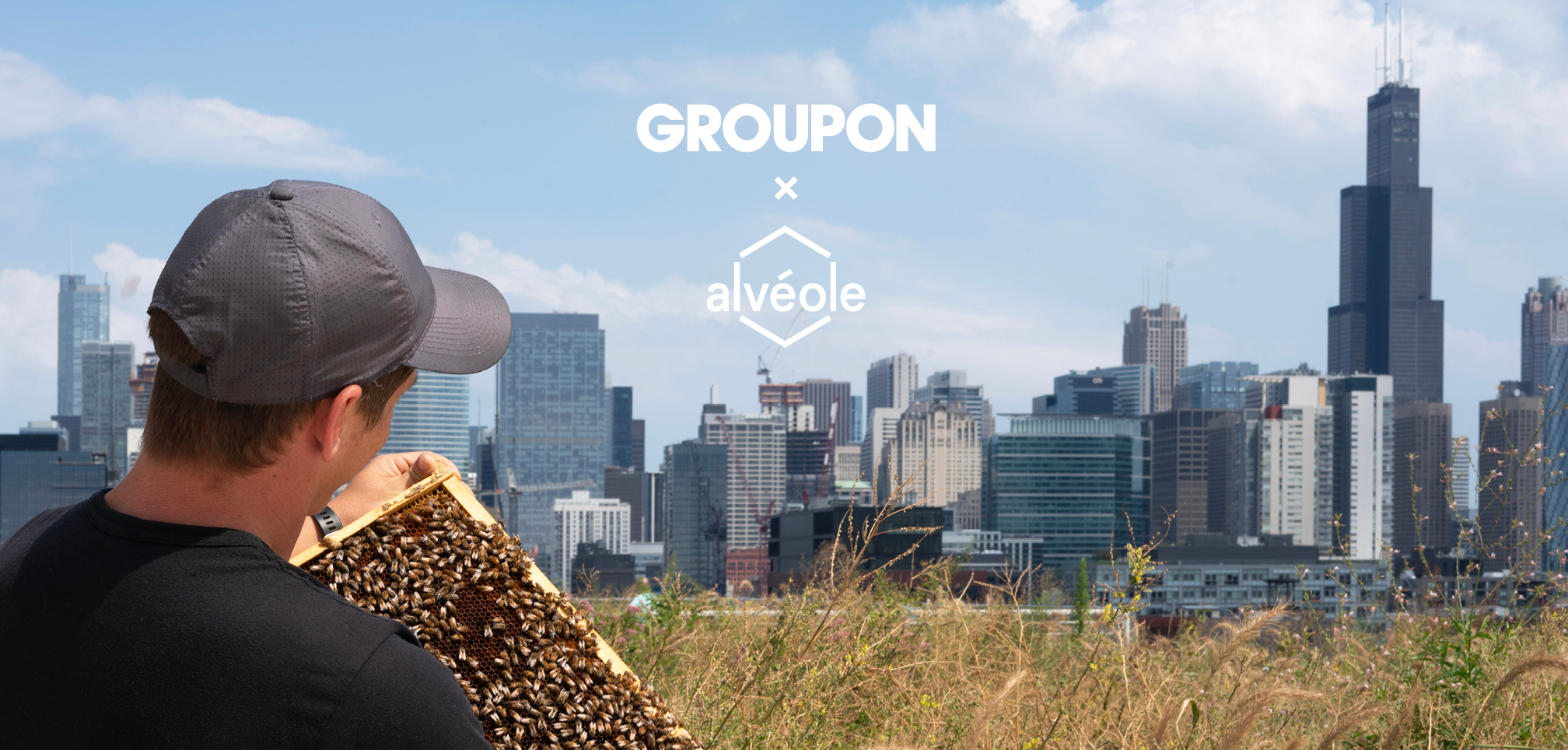 Chicago-city-skyline-with-urban-beekeeper-holding-a-honeycomb-frame-with-Groupon-and-Alvéole-logos