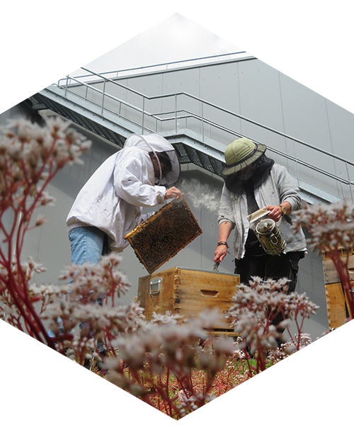Two-beekeepers-in-action